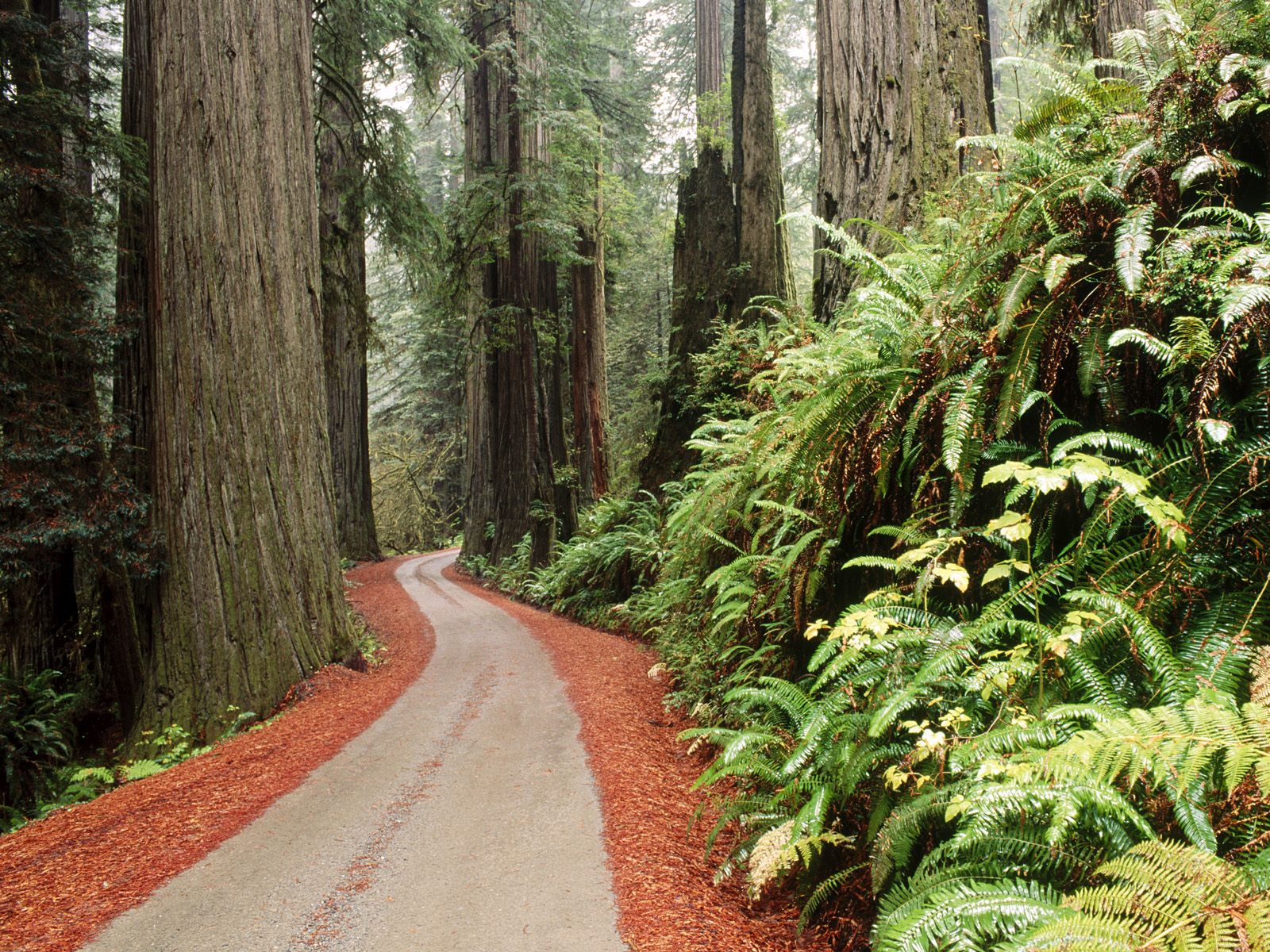 Redwood National california 1600 x 1200