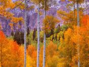 Fall Aspens Cimarron Road Colorado 800 x 600