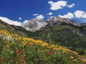 Spring Wildflowers in Alpine Meadow at Lead King Basin in Marble Colorado 1600 x 1200