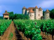 Vineyard Cahors Lot Valley 1600 x 1200